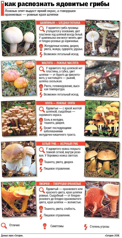 Как различать грибы