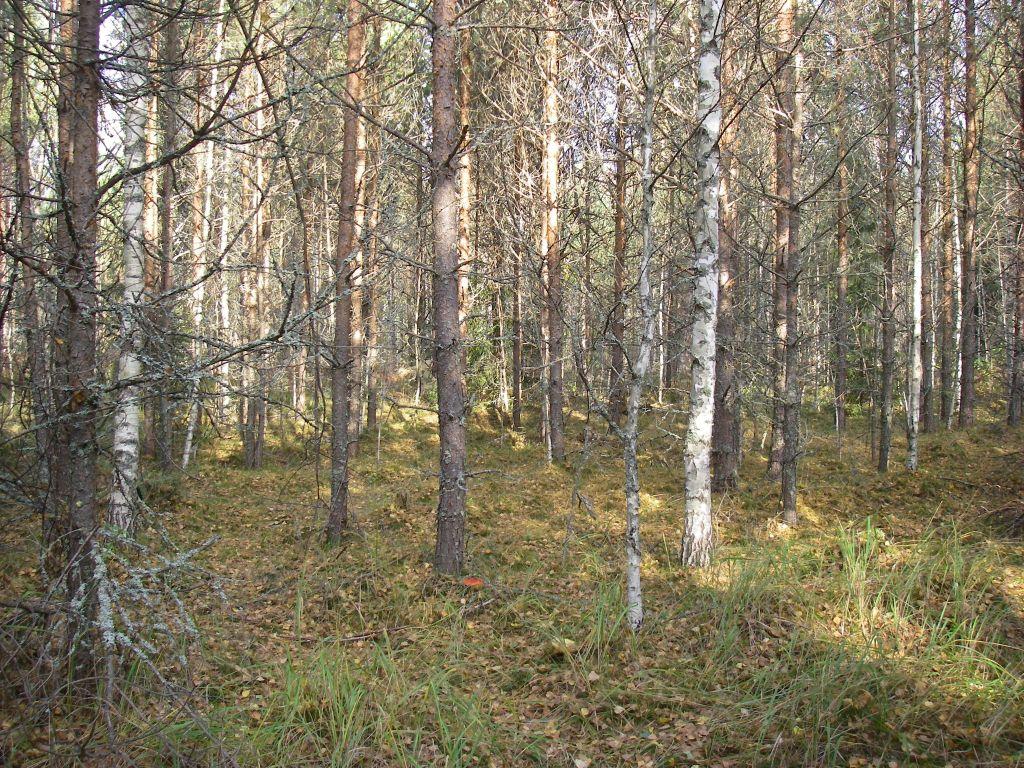 Фото раздетых девочек в лесу бесплатно 7 фотография