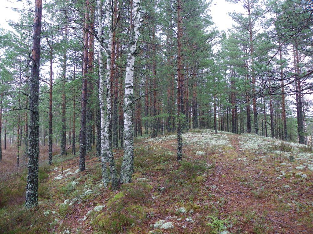 Фото раздетых девочек в лесу бесплатно 21 фотография