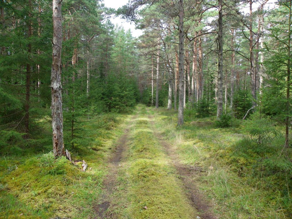 Фото раздетых девочек в лесу бесплатно 11 фотография